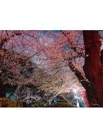 錦糸町 大江戸 - りこの女の子ブログ画像