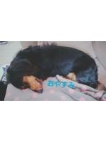 錦糸町 大江戸 - みらんの女の子ブログ画像