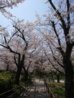 錦糸町 大江戸 朝 - はなこの女の子ブログ画像